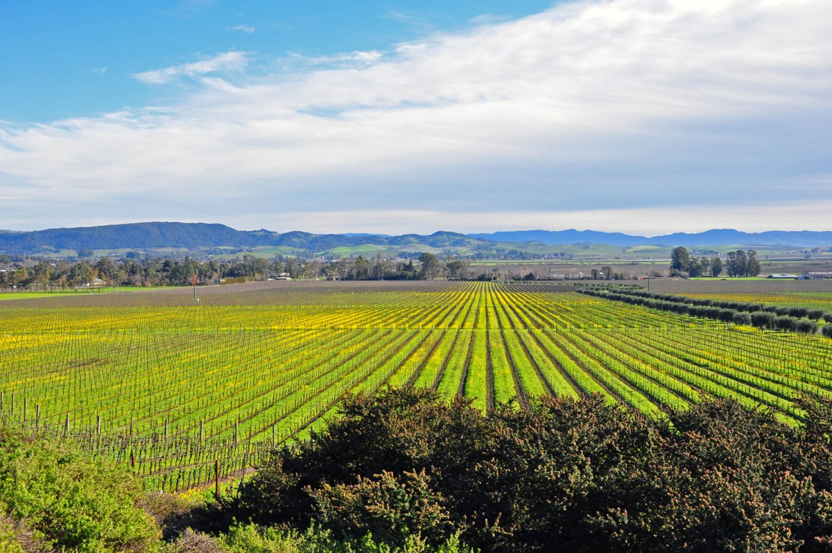 1. Sonoma Vineyards