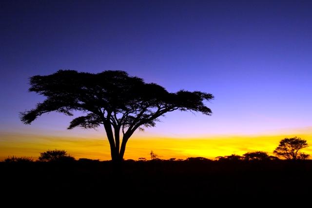 Tanzania; Serengeti