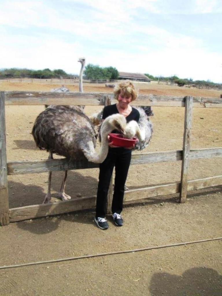 6. Hungry Ostriches