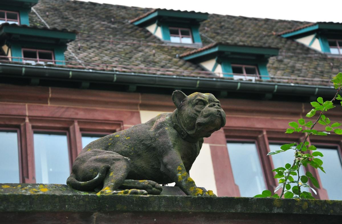 11. Basel dog