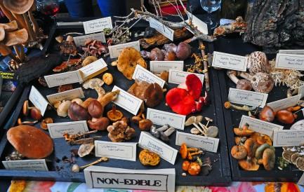 Foragers Mushroom display